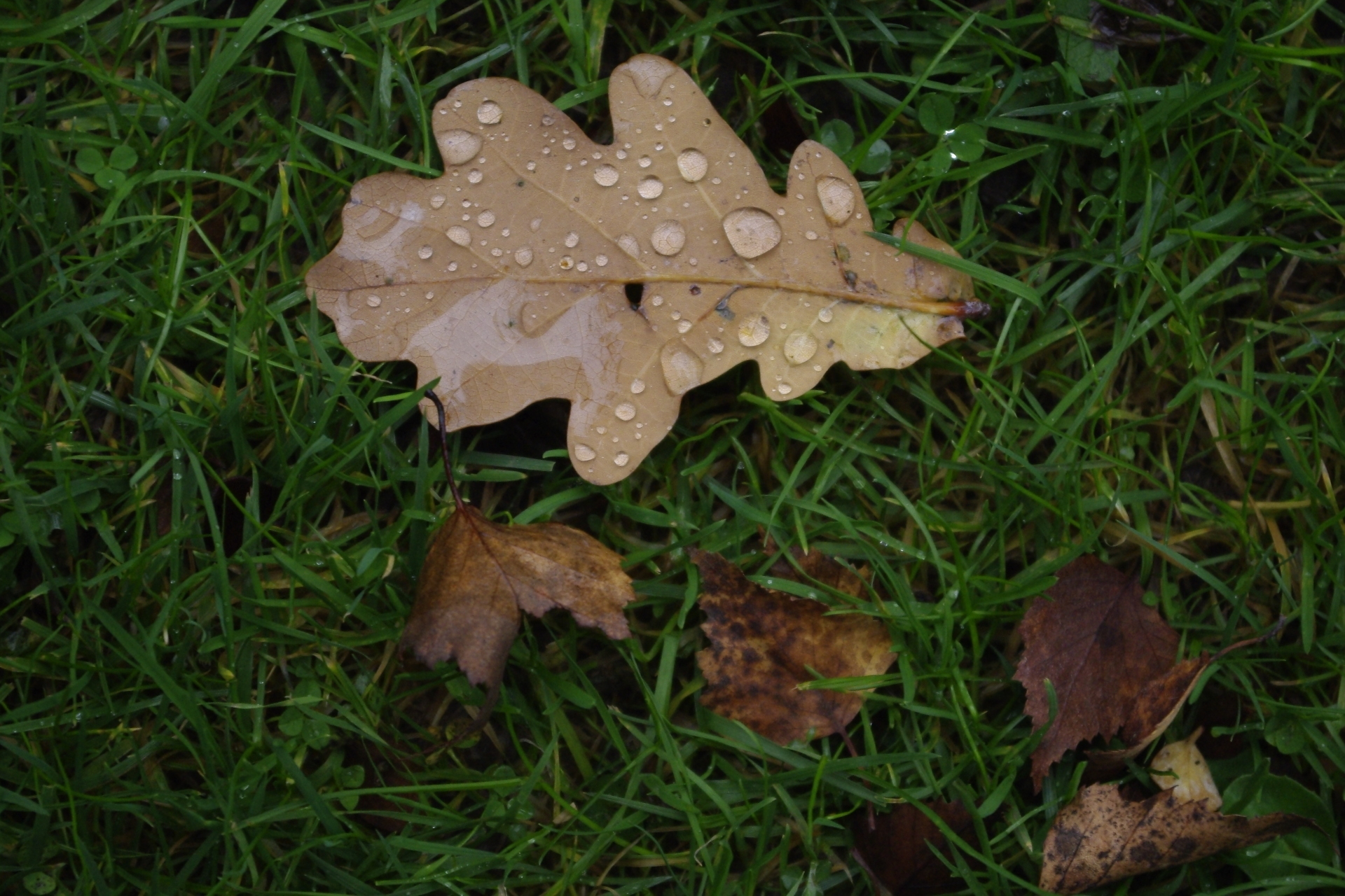 A Wet Autumn