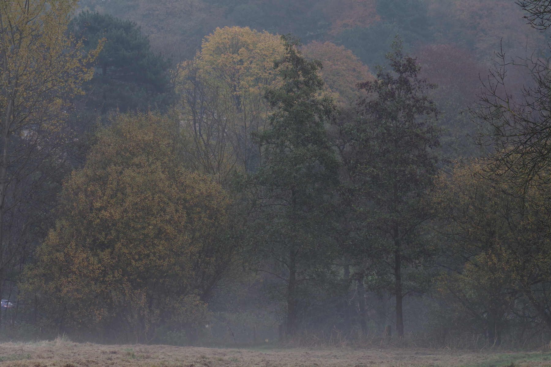 Autumn Mist in the Countryside