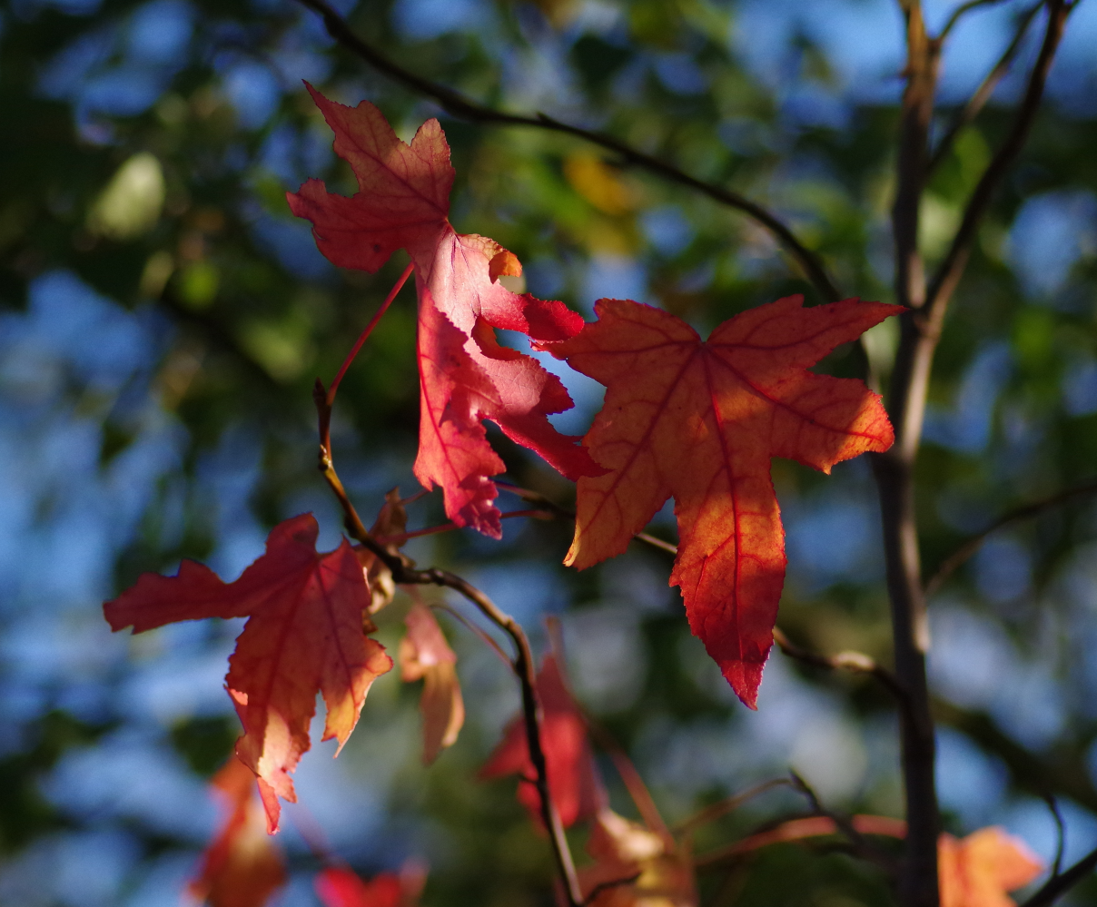 Sunlight and Autumn Leaves