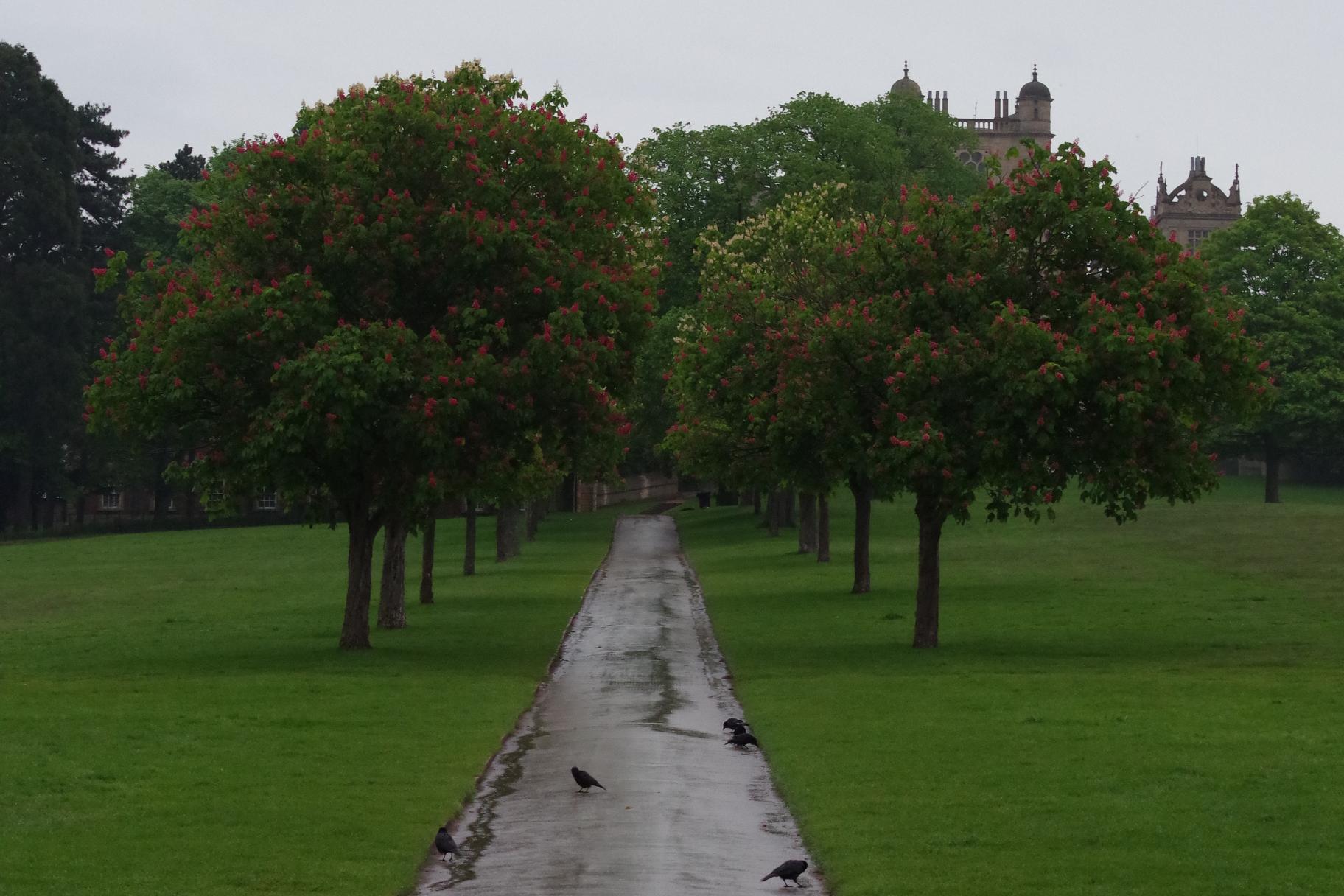 Trees in Flower